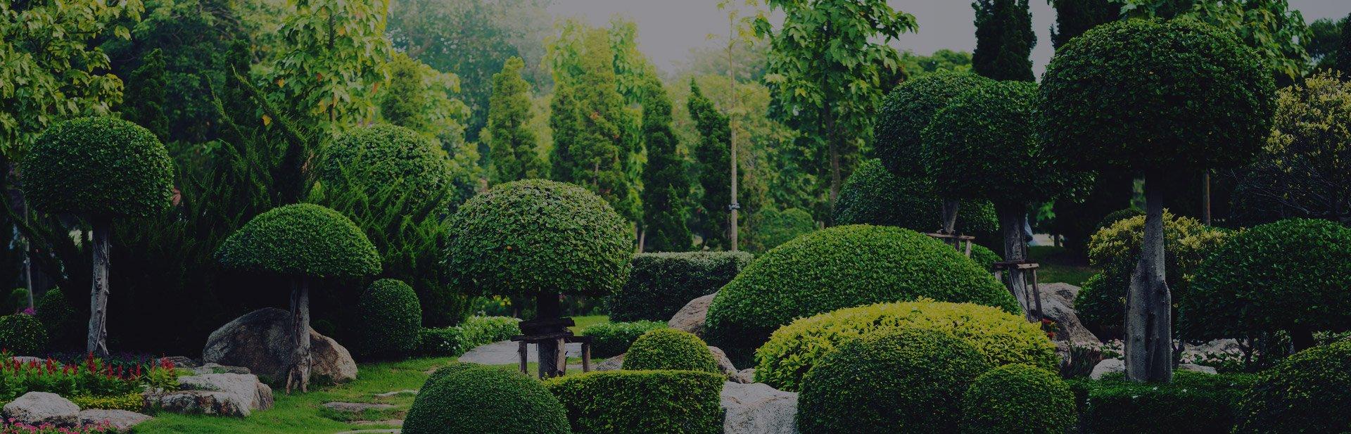 szkółka drzew ozdobnych