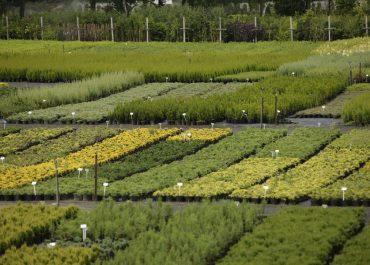 centrum ogrodnicze mazowieckie