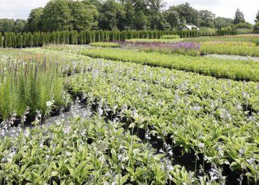sprzedaż roślin do ogrodu