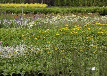 szkółka roślin sprzedaż hurtowa
