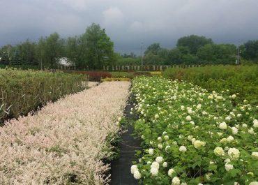 rośliny ogrodowe warszawa